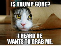 IS TRUMP GONE  I HEARD HE  WANTS TO GRAB ME Sorry kitty, i wish he was. -rob