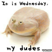 "Waiting for G̶o̶d̶o̶t̶ ""It's Wednesday, my dudes"" frog: is Wednesday,  my dudes  IN MY FROG Waiting for G̶o̶d̶o̶t̶ ""It's Wednesday, my dudes"" frog"