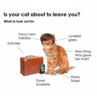 Who gave her that?: Is your cat about to leave you?  What to look out for  Fancy newP  hairdoo  Loveless  glare  Suitcase  New bling-  Who gave  her that?  Plane  Ticket  Travel  Scrabble Who gave her that?