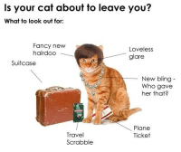 Bling, Fancy, and Travel: Is your cat about to leave you?  What to look out for:  Fancy new  hairdoo  Loveless  glare  Suitcase  New bling  Who gave  her that?  Plane  Ticket  Travel  Scrabble
