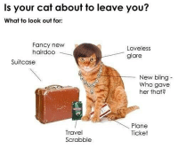 Bling, Funny, and Fancy: Is your cat about to leave you?  What to look out for:  Fancy new  hairdoo  Loveless  glare  Suitcase  New bling-  Who gave  her that  Plane  Ticket  Travel  Scrabble Know the signs