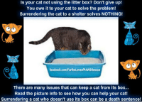 A cat not using the litter box is a problem that's hard to ignore. Inappropriate urination in cats is probably the number one problem among cat owners. In fact, litter box problems are the most common reason why a cat is taken to an animal shelter, or even euthanized.  Contrary to popular belief, cats don't stop using the litter box because they're trying to get back at their owners for something. A feline with this issue is trying is trying to tell the owner something. It's important to figure out what the problem is, and to deal with it quickly, before it becomes an ingrained habit.  Take the offending cat to the vet for a check-up to rule out any medical issues. A cat with a feline urinary tract infection may associate the litter box with pain, and start urinating elsewhere. Older pets may have arthritis, which can make it painful to get into and out of the box. Take care of any medical problems first.  There are three main reasons why a cat is not using the litter box: -The kitty has developed an aversion to the box -She doesn't like the cat litter -The box is located in an area she doesn't like  1. Litter Box Aversions If something about the litter box bothers the cat, she won't use it. As mentioned above, a cat with a feline bladder infection may learn to associate using the litter box with pain. An arthritic cat, or a small kitten, may have difficulty accessing the box, too.  A large cat needs a larger box to be comfortable. If she's cramped, she may find a more comfortable place on her own.  Although humans like covered litter boxes, cats don't always appreciate them, since they keep odors in, instead of allowing them to dissipate. Dirty litter is a turn-off, too. Cats don't like dirty smelly bathrooms any more than people do.  Are there small children or other pets in the home? A cat that's being bothered by a small child or another cat or dog while she's using the litter pan may find a safer area to do her business.  2. Use the Right Cat Litter A cat may n