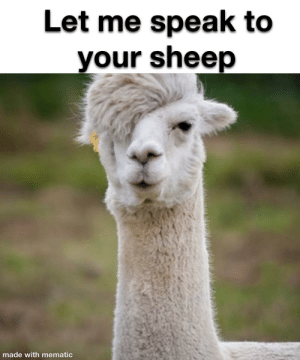 Is your lama a Karen I know it is crap: Is your lama a Karen I know it is crap
