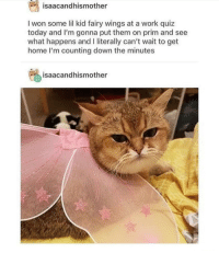 Work, I Won, and Home: isaacandhismother  I won some lil kid fairy wings at a work quiz  today and I'm gonna put them on prim and see  what happens and I literally can't wait to get  home I'm counting down the minutes  isaacandhismother That went about as well as expected!
