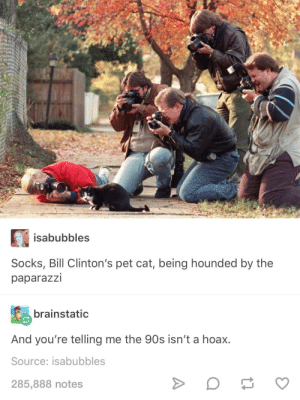 90's, Cat, and Tails: isabubbles  Socks, Bill Clinton's pet cat, being hounded by the  paparazzi  brainstatic  And you're telling me the 90s isn't a hoax.  Source: isabubbles  285,888 notes the tails from the 90s will knock your Socks off