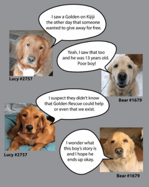Click, Memes, and Saw: Isaw a Golden on Kijiji  the other day that someone  wanted to give away for free.  Yeah, I saw that too  and he was 13 years old.  Poor boy!  Lucy # 2757  I suspect they didn't know  that Golden Rescue could help  or even that we exist  Bear #1679  I wonder what  this boy's story is  and I hope he  ends up okay.  Lucy #2757  Bear There are many reasons for surrender and we are here to support you. We know that not everyone looks kindly on those who need to surrender their Golden, but that is not who we are at Golden Rescue. Lucy #2757 and Bear #1679 say it best. Please copy or click on the link to read what they have to say: https://bit.ly/2VHvIDw  #goldenretriever #rescuedog #awareness