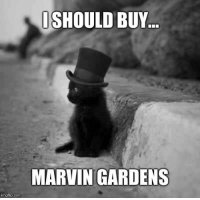 Advice, Monopoly, and Tumblr: ISHOULD BUY...  MARVIN GARDENS  imgflip.com advice-animal:  Monopoly Cat