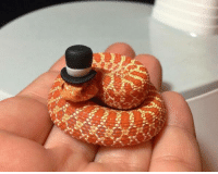 It's a snake wearing a top hat...need I say more!: iSk  kEk It's a snake wearing a top hat...need I say more!