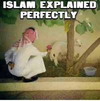 ISLAM EXPLAINED PERFECTLY | Meme on ME ME