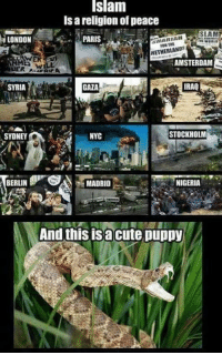 cute puppys: Islam  ls religion of peace  SLAM  LONDON  NARIAH  PARIS  NETHERLANDS  AMSTERDAM  RER A  IRAQ  SYRIA  STOCKHOLM  NYC  SYDNE  SA MADRID  BERLIN  NIGERIA  And this is a cute puppy