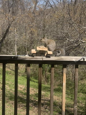 Isolated and bored, I made a squirrel picnic table. Was in use an hour later.: Isolated and bored, I made a squirrel picnic table. Was in use an hour later.