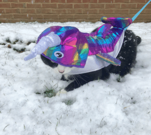 It's a narwhal. Not a cat. Totally not a cat: It's a narwhal. Not a cat. Totally not a cat