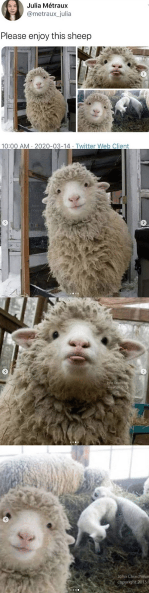 It's kind of sad that this sheep is far more photogenic than I'll ever be😭😂: It's kind of sad that this sheep is far more photogenic than I'll ever be😭😂