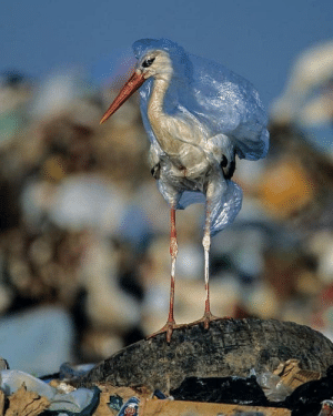 It can take up to 1,000 years for a plastic bag to decompose naturally: It can take up to 1,000 years for a plastic bag to decompose naturally