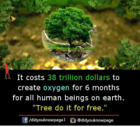 "Memes, Earth, and Free: It costs 38 trillion dollars to  create oxygen for 6 months  for all human beings on earth  ""Tree do it for free.""  f/didyouknowpagel@didyouknowpage"