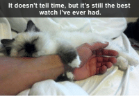 Grumpy Cat, Best, and Time: It doesn't tell time, but it's still the best  watch I've ever had.