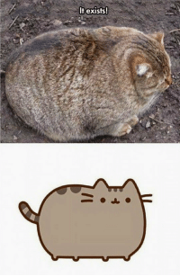 <p>Pusheen Is Actually Real.</p>: It exists! <p>Pusheen Is Actually Real.</p>
