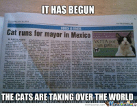 I knew this day would come.: IT HAS BEGUN  ODDS & ENDS  Cat runs for mayor in Mexico  HANNA  VOTA port  un gato  THE CATSARETAKINGOVER THE WORLD  memecenter-Com I knew this day would come.