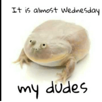 Wednesday: It is almost Wednesday  my dudes