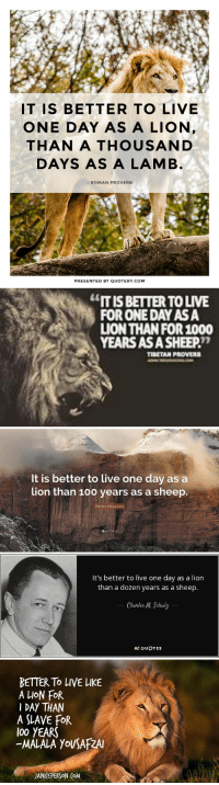 "Anaconda, Tumblr, and Wow: IT IS BETTER TO LIVE  ONE DAY AS A LION  THAN A THOUSAND  DAYS AS A LAMB  - ROMAN PROVERB  PRESENTED BY QUOTERY.coM   ""IT IS BETTER TO LIVE  FOR ONE DAY ASA  LION THAN FOR 1000  YEARS ASASHEEP  ココ   It is better to live one day as a  ion than 100 years as a sheep.  Benito Mussolini   It's better to live one day as a lion  than a dozen years as a sheep.  Charles M. Schulz  AZ QUOTES   BETTER To LIVE LIKE  A LION FOR  I DAY THAN  A SLAVE FoR  (00 YEARS  -MALALA YoUSAFZA  JANI EPERSON.(oM <p><a href=""https://huntrad.tumblr.com/post/164682767112/maoh-huntrad-wow-very-inspirational-thank"" class=""tumblr_blog"">huntrad</a>:</p>  <blockquote><p><a href=""http://maoh.tumblr.com/post/164682714561/huntrad-wow-very-inspirational-thank-you"" class=""tumblr_blog"">maoh</a>:</p>  <blockquote><p><a href=""https://huntrad.tumblr.com/post/161484059762/wow-very-inspirational-thank-you-tibetian-roman"" class=""tumblr_blog"">huntrad</a>:</p> <blockquote><p>Wow very inspirational<br/> Thank you tibetian roman malala m. mussolini</p></blockquote> <figure data-orig-width=""712"" data-orig-height=""514"" class=""tmblr-full""><img src=""https://78.media.tumblr.com/98da768c917b1c9ca14986c6972d0496/tumblr_inline_ovd0dxXUCn1tv5irb_540.jpg"" alt=""image"" data-orig-width=""712"" data-orig-height=""514""/></figure></blockquote>  <p>How can i cancel my post</p></blockquote>"
