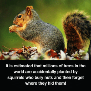 Memes, Trees, and World: It is estimated that millions of trees in the  world are accidentally planted by  squirrels who bury nuts and then forget  where they hid them!