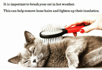 Tip of the week! 😊: It is important to brushyour cat in hot weather.  Th  is can help remove loose hairs and lighten up theirinsulation. Tip of the week! 😊