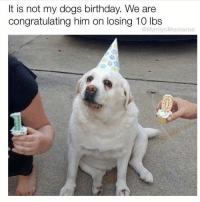 Birthday, Dogs, and Funny: It is not my dogs birthday. We are  congratulating him on losing 10 lbs  @MarilynMemeroe Tbh I'd do that for myself😅😩 Via @marilynmemeroe