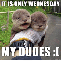 This week is dragging on and on: IT IS ONLY WEDNESDAY  MY DUDES  made on imgur This week is dragging on and on