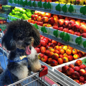 It looks very satisfying to go to the supermarket.: It looks very satisfying to go to the supermarket.