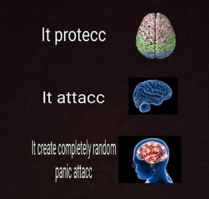 Thicc, Damn, and Attacc: It protecc  It attacc  torade co ereriom damn im thicc