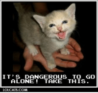 lol cats: IT' S DANGEROUS TO GO  ALONE TAKE THIS.  LOLCATS COM