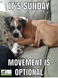 Happy Sunday boxer lovers! Enjoy the day cuddling with your pack. #movementisoptional #NWBRlove: IT 'S SUNDAY  MOVEMENT IS  BR OPTIONAL  mematic.net Happy Sunday boxer lovers! Enjoy the day cuddling with your pack. #movementisoptional #NWBRlove