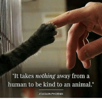 """https://t.co/8V1W7f0y1v: """"It takes nothing away from a  human to be kind to an animal.""""  JOAQUIN PHOENIX https://t.co/8V1W7f0y1v"""