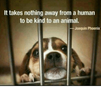 Never stop retweeting... https://t.co/JmvYnmWOe2: It takes nothing away from a human  to be kind to an animal.  Joaquin Phoenix Never stop retweeting... https://t.co/JmvYnmWOe2