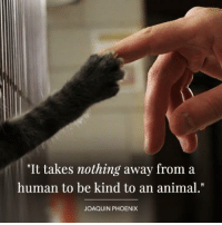 """Kindness can mean everything to an animal who needs it. <3: """"It takes nothing away from:a  human to be kind to an animal.""""  JOAQUIN PHOENIX Kindness can mean everything to an animal who needs it. <3"""