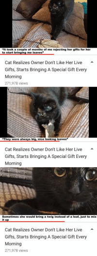 """Crying, Live, and Nice: """"It took a couple of months of me rejecting her gifts for her  t """"  o start bringing me leaves  Cat Realizes Owner Don't Like Her Live -  Gifts, Starts Bringing A Special Gift Every  Morning  271,978 views   """"They were always big, nice looking leaves""""  Cat Realizes Owner Don't Like Her Live  Gifts, Starts Bringing A Special Gift Every  Morning   Sometimes she would bring a twig instead of a leaf, just to mix  it up  Cat Realizes Owner Don't Like Her Live -  Gifts, Starts Bringing A Special Gift Every  Morning  271,978 views <p>i am.. crying</p>"""