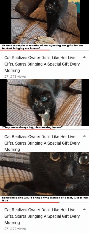 """babyanimalgifs: i am.. crying: """"It took a couple of months of me rejecting her gifts for her  t """"  o start bringing me leaves  Cat Realizes Owner Don't Like Her Live -  Gifts, Starts Bringing A Special Gift Every  Morning  271,978 views   """"They were always big, nice looking leaves""""  Cat Realizes Owner Don't Like Her Live  Gifts, Starts Bringing A Special Gift Every  Morning   Sometimes she would bring a twig instead of a leaf, just to mix  it up  Cat Realizes Owner Don't Like Her Live -  Gifts, Starts Bringing A Special Gift Every  Morning  271,978 views babyanimalgifs: i am.. crying"""