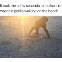 Me too😂😂😂😂: It took me a few seconds to realise this  wasn't a gorilla walking on the beach Me too😂😂😂😂