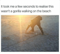 <p>HARAMBE HAS RETURNED</p>: It took me a few seconds to realise this  wasn't a gorilla walking on the beach <p>HARAMBE HAS RETURNED</p>