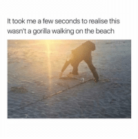 What would you do if I started putting really ugly instagram filters on my posts? - mon textposts textpost: It took me a few seconds to realise this  wasn'ta gorilla walking on the beach What would you do if I started putting really ugly instagram filters on my posts? - mon textposts textpost