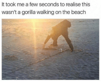 It took me a while 😂 (@thefunnyintrovert): It took me a few seconds to realise this  wasn'ta gorilla walking on the beach It took me a while 😂 (@thefunnyintrovert)