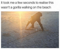 @xhoenest is hands down the best meme account on Instagram 😂: It took me a few seconds to realise thiss  wasn't a gorilla walking on the beach @xhoenest is hands down the best meme account on Instagram 😂
