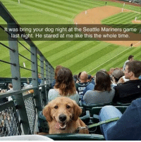 Funny, Money, and Game: It was bring your dog night at the Seattle Mariners game  last night. He stared at me like this the whole time.  CHIP Money well spent (@charliethed_og)