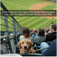 @funny has the best memes: It was bring your dog night at the Seattle Mariners game  last night. He stared at me like this the whole time.  CHIP @funny has the best memes