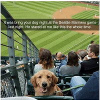 @hilarious.ted posts the cutest memes!!: It was bring your dog night at the Seattle Mariners game  last night. He stared at me like this the whole time  CHIP @hilarious.ted posts the cutest memes!!