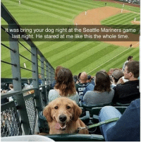 Follow @missmemeaholic ❤: It was bring your dog night at the Seattle Mariners game  last night. He stared at me like this the whole time  CHIP Follow @missmemeaholic ❤