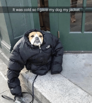 Memes, Cold, and 🤖: It was cold so 1 gave my dog my jacket https://t.co/S4LWVx3UYx
