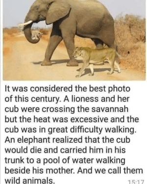 Animals, Best, and Elephant: It was considered the best photo  of this century. A lioness and her  cub were crossing the savannah  but the heat was excessive and the  cub was in great difficulty walking.  An elephant realized that the cub  would die and carried him in his  trunk to a pool of water walking  beside his mother. And we call them  wild animals,  15.17 Elephantastic