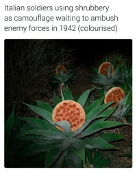 "Memes, Soldiers, and History: Italian soldiers using shrubbery  as camouflage waiting to ambush  enemy forces in 1942 (colourised) <p>I&rsquo;m really enjoying these ridiculous history memes. via /r/memes <a href=""http://ift.tt/2kTSXYp"">http://ift.tt/2kTSXYp</a></p>"