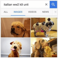 Memes, 🤖, and Ww2: itallian ww2 k9 unit  ALL  VIDEOS  IMAGES  NEWS